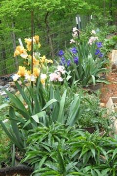 Stone Garden Farms Index of farms gardensphotosstones garden workwithnaturefo
